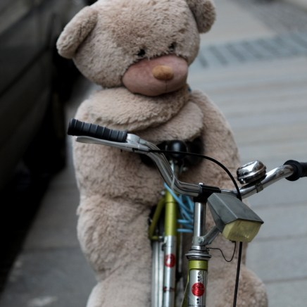 Auf wen dieser junge Bär wohl wartet?