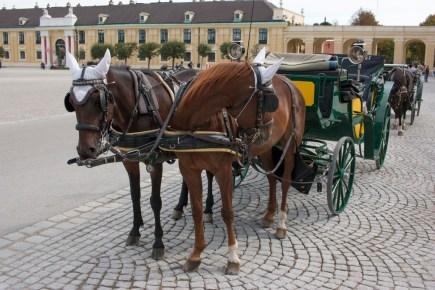 Fiaker am Schloss Schönbrunn