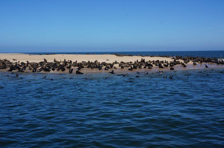 Robbenkolonie Swakopmund