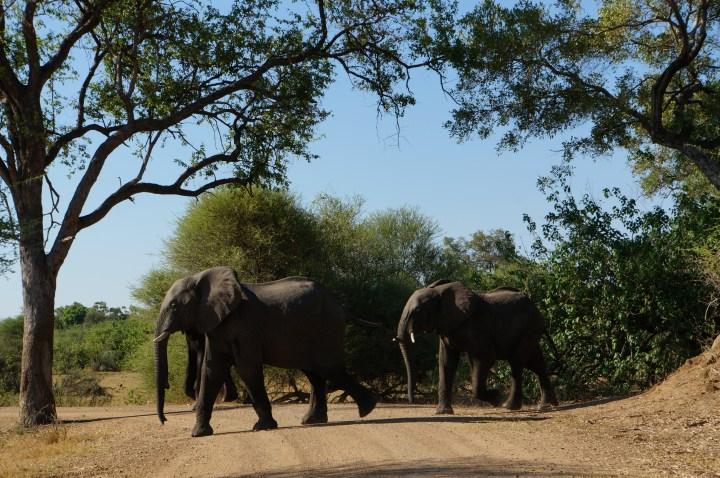 Elefanten Okavango Delta