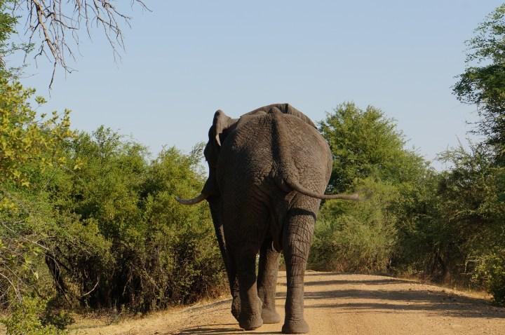 Elefantenrücken Namibia