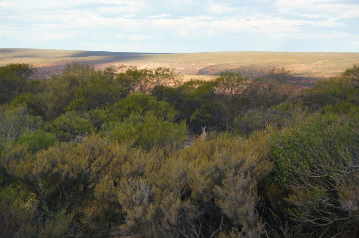 Kalbarri National Park Vegetation