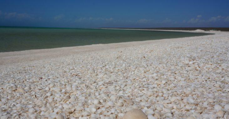 Shell Beach Shark Bay