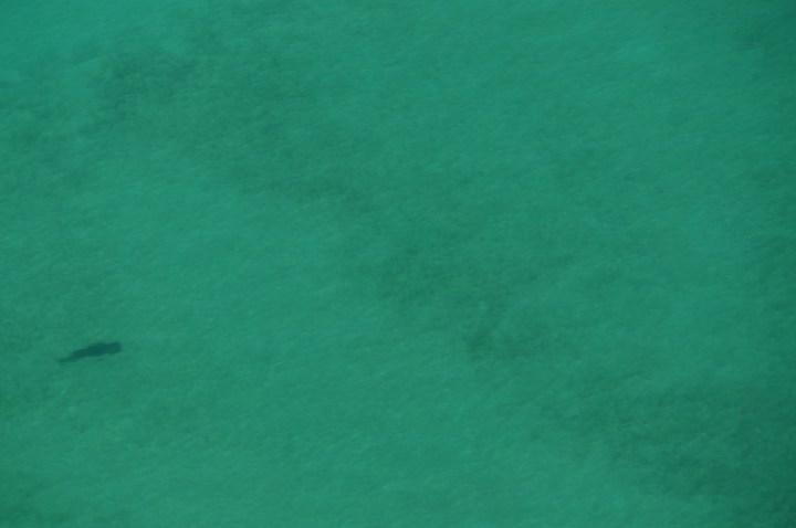 Dugong Australien