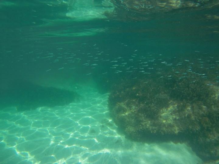 Viele Fische vor Rottnest Island
