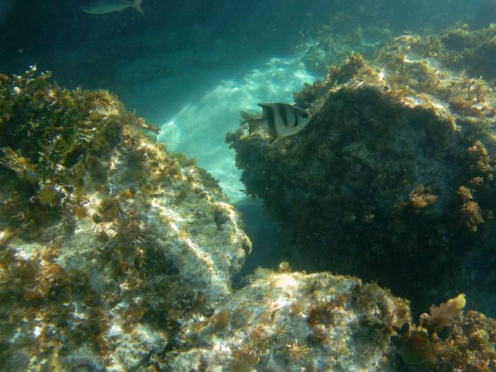 Korallen Rottnest