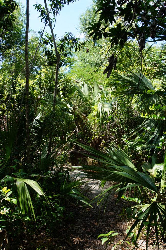 Wandern in den Everglades