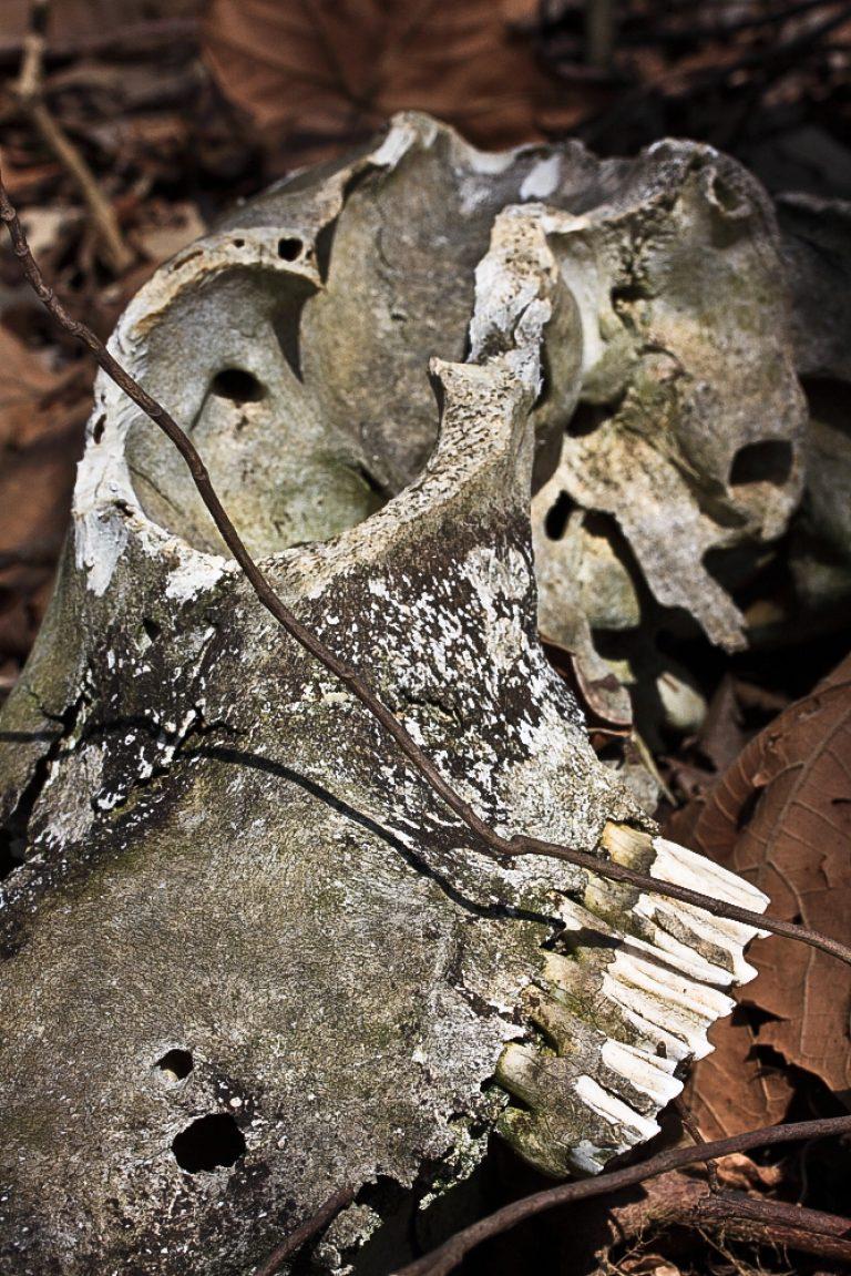 Aged Skull