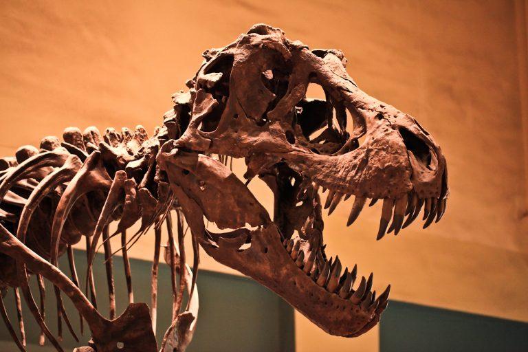 Tyrannosaurus Rex Pt.2