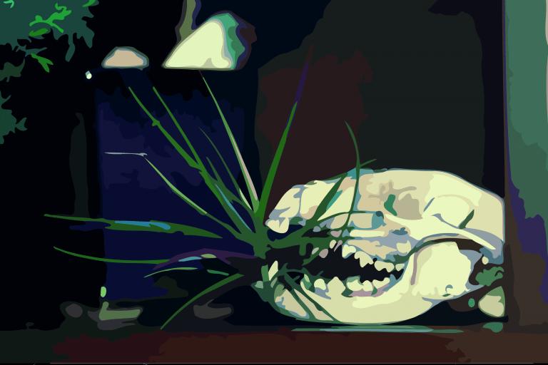 Among Bones