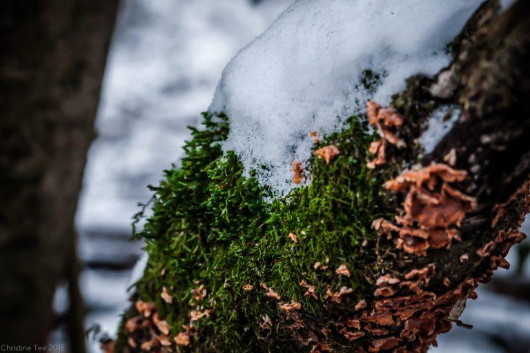 Snow, Moss, and Lichen