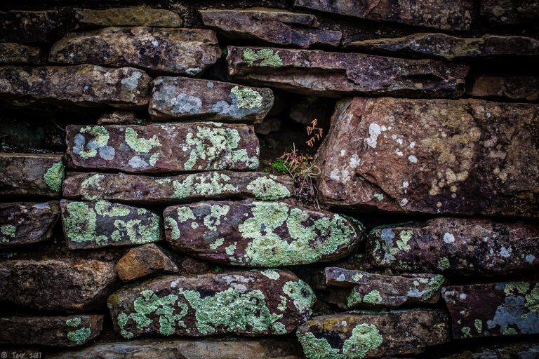 Lichen and Stonework