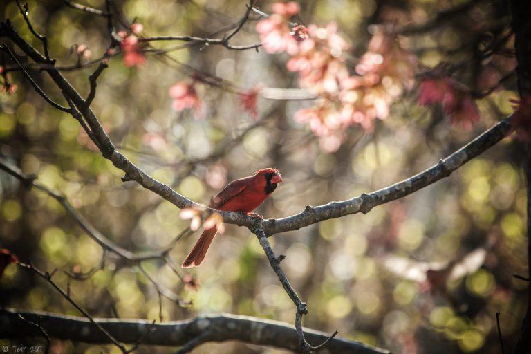 Spring Reds