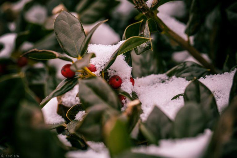 Typical Winter Scene