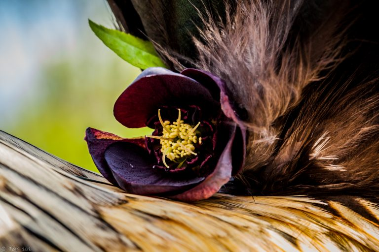 Hellebore & feathers.