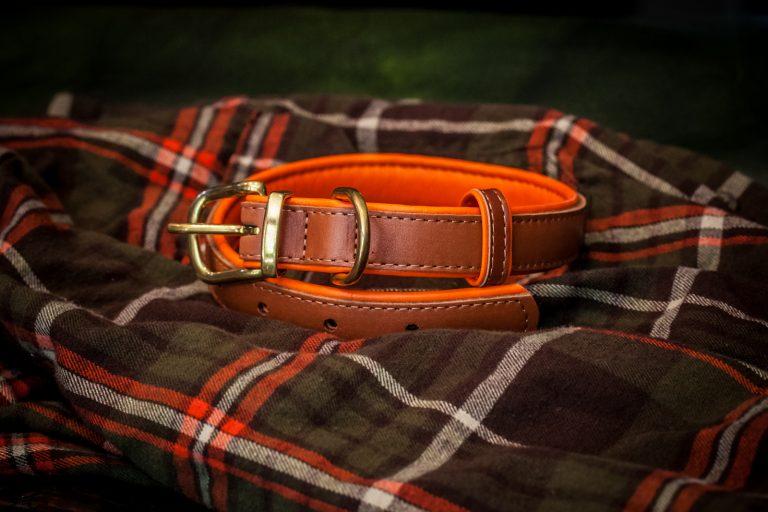 Hunting collar.