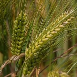 Farming and Its Tech Future