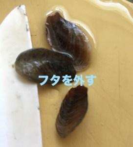 つぶ貝の蓋を外す