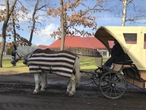 ノーザンホースパークの馬車の白馬