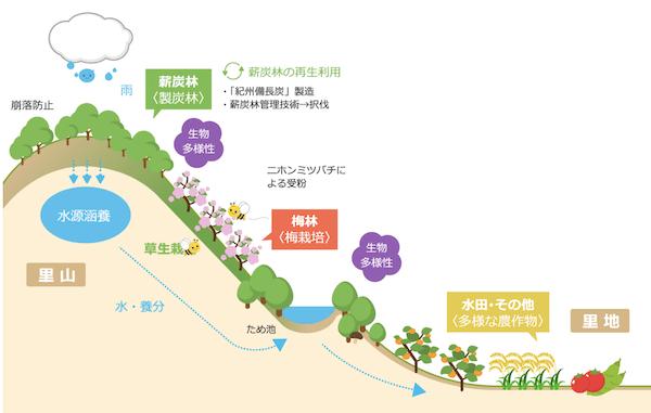 みなべ田辺の梅栽培システムジアス