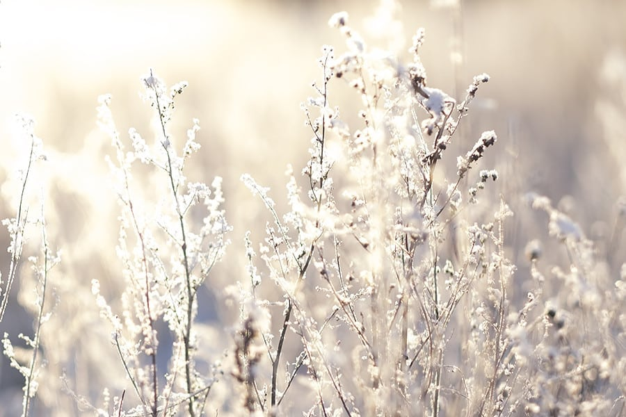 160106_winter_hus30_DSF3617