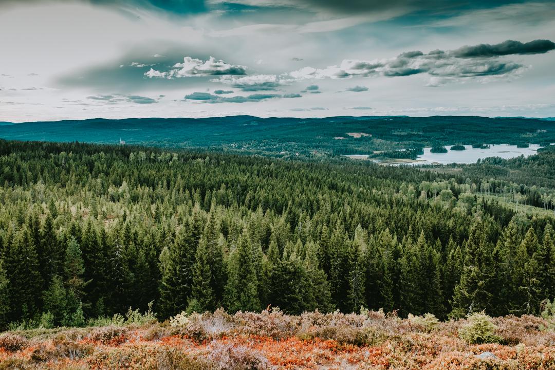 Vandring över daggstänkta ber i Säfsen med tidiga höstfärger, kvinnliga äventyrare, svenska resebloggar, nordic tb, fujifilm nordic