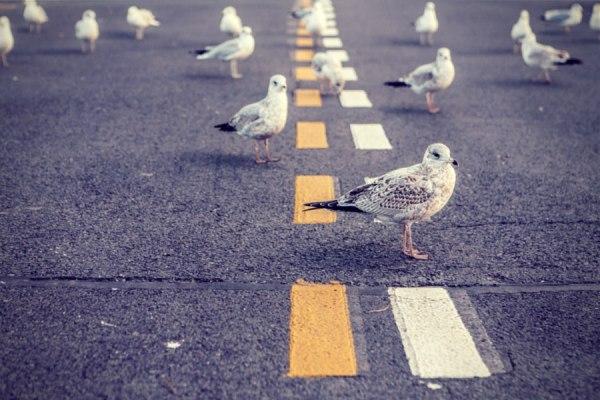 5 redenen om met Twitter te beginnen