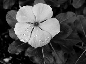 dikt om sorg