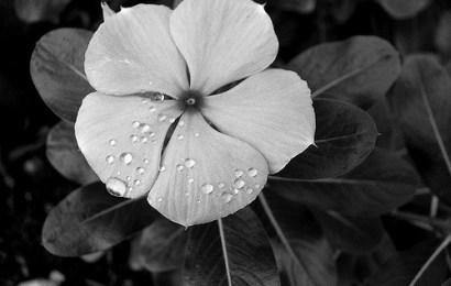 Dikt om sorg – Samling av 20 dikt til kondolansekortet / begravelse