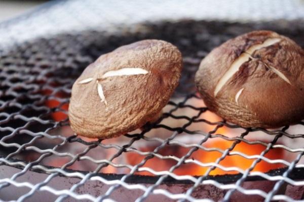 シイタケ栽培キッドで簡単お部屋で栽培 一週間で新鮮焼きシイタケを満喫したよ