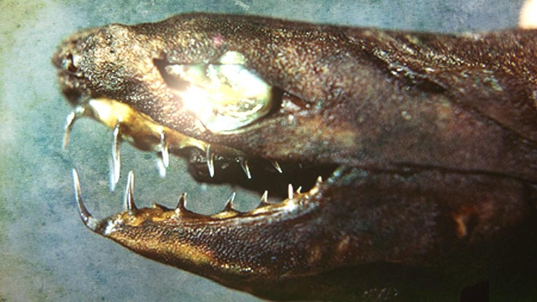 tiburon-vibora