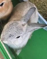 sylvester-bunny