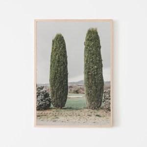 two cypress tree spain print