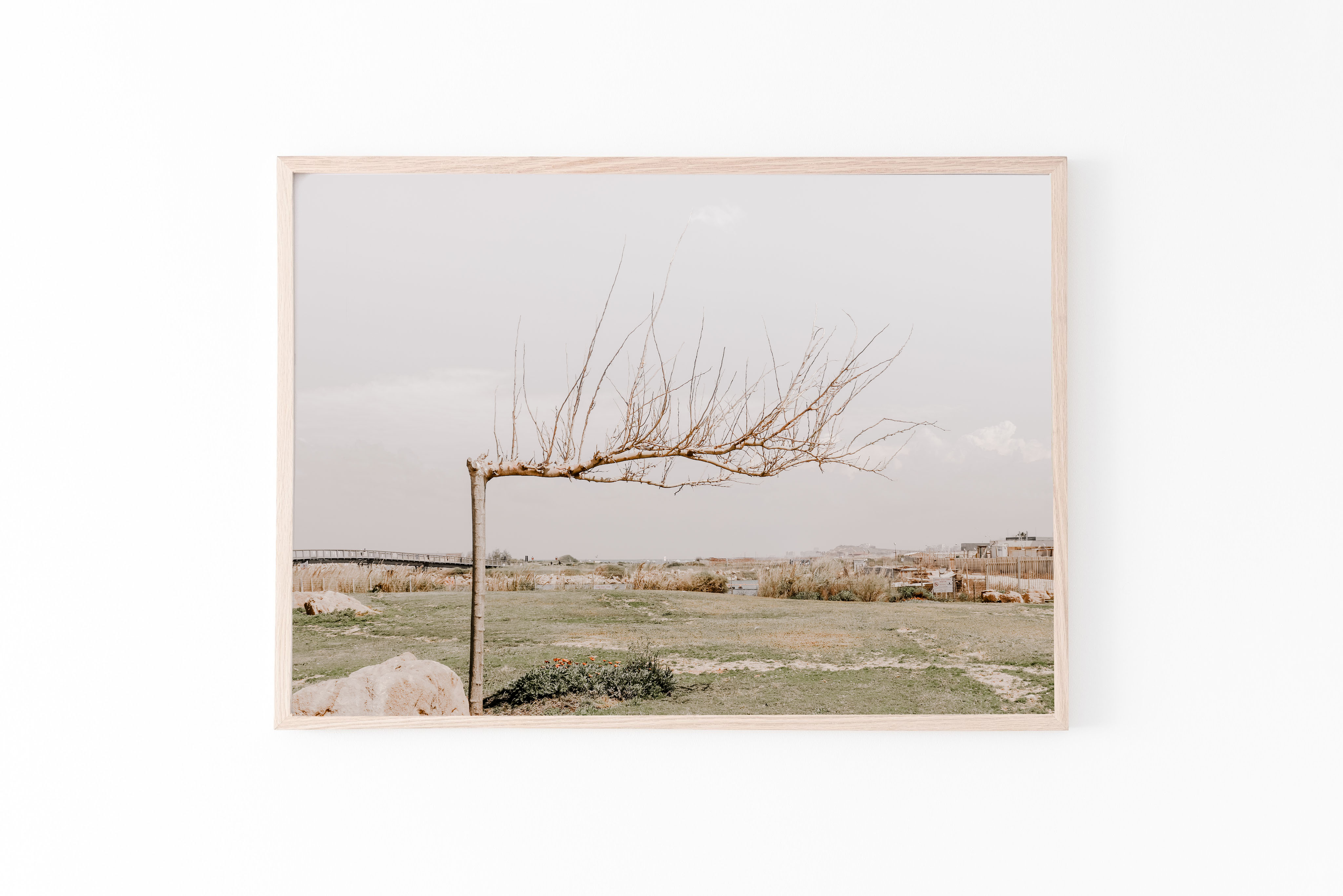 autumn tree tel aviv wall print