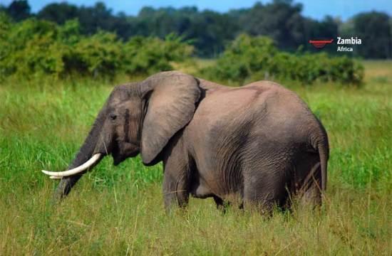 Africa Zambia tourism