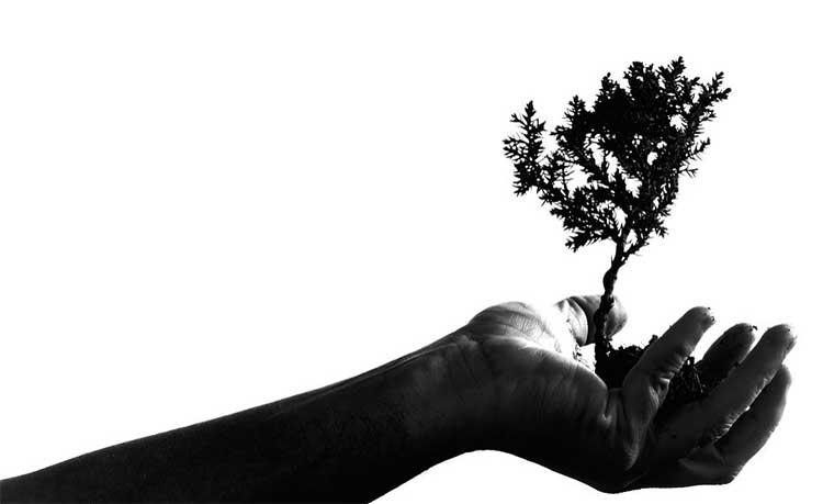 tree planting eco initiative