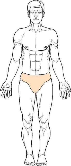 Anatomie humaine Position de reference ou position anatomique standard