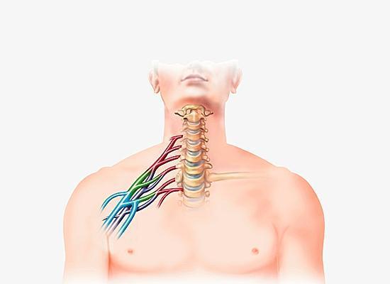 plexus brachial - Cours d'Anatomie