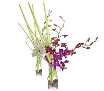 Dendrobium Orchid Arrangements