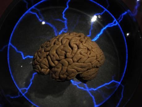Beauty sleep or brains sleep? Switching off 'helps regrow brain cells'