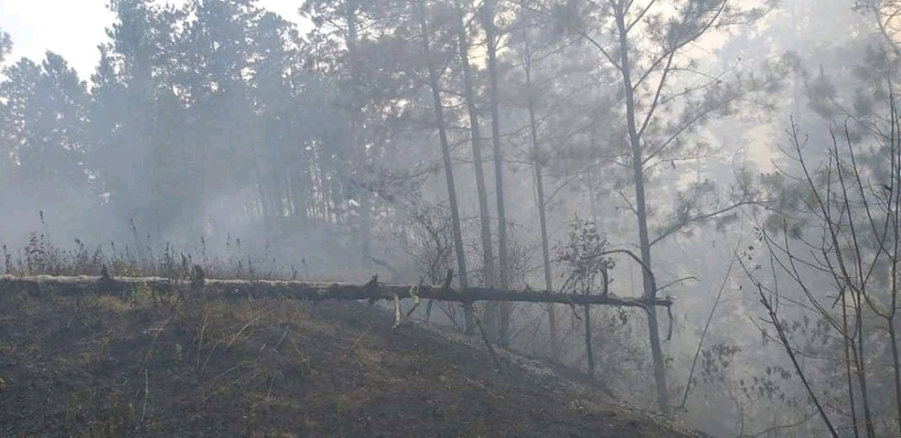 Un voraz incendio arrasó con más de 250 manzanas de bosques de pino en Condega