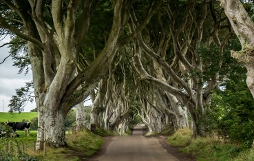 Dark Hedges - Northern Ireland