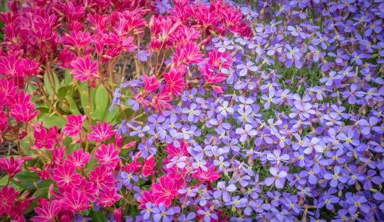 Floralscape
