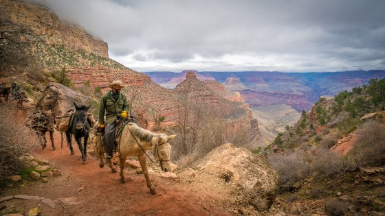 Riders - Grand Canyon , Arizona