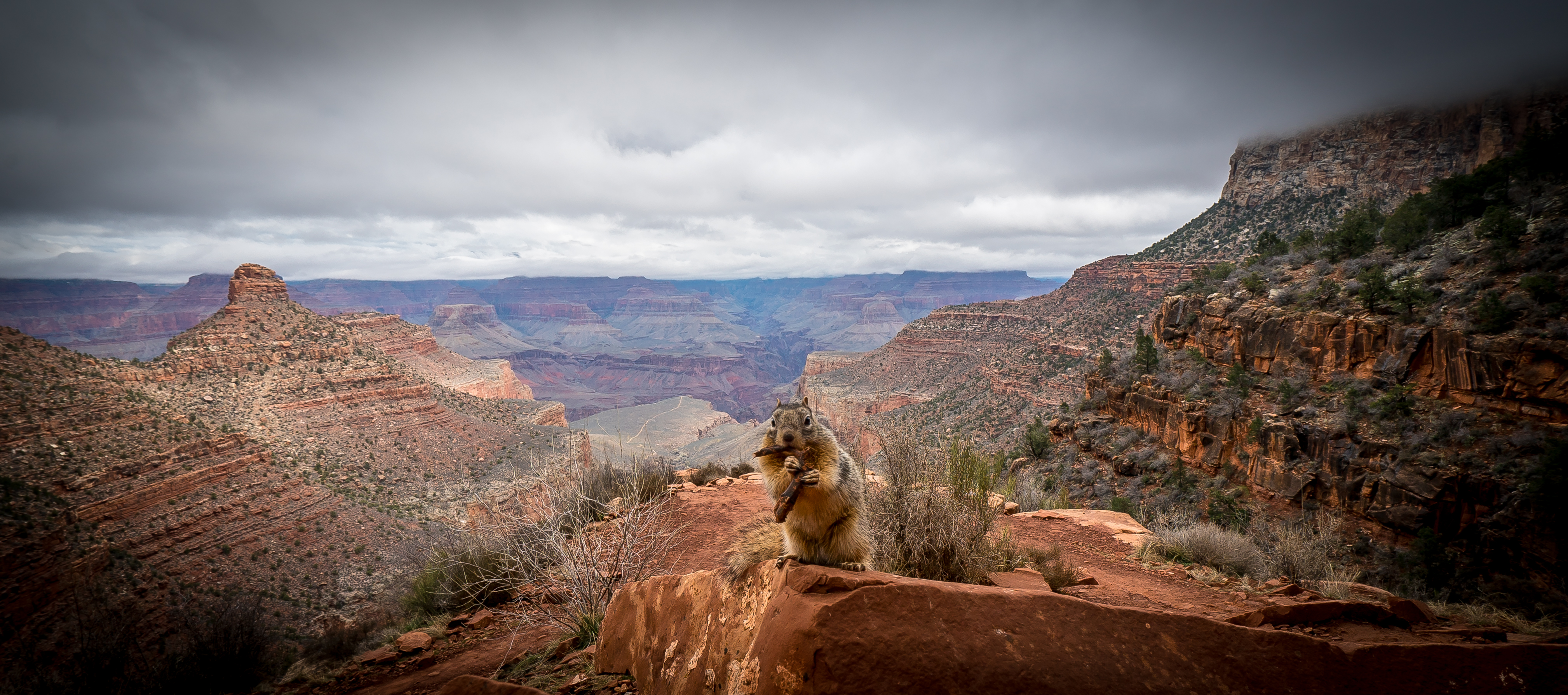 Curious Squirrel - Grand Canyon , Arizona