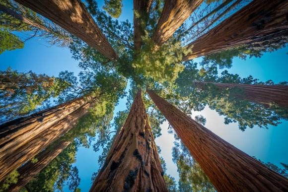 Sequoia Trees Group