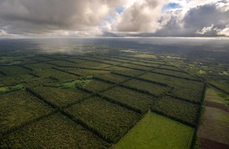 Fields near Hilo