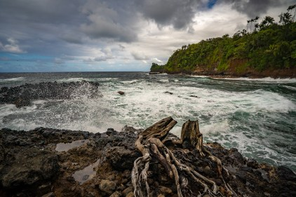 Tree Stumps by the Ocean