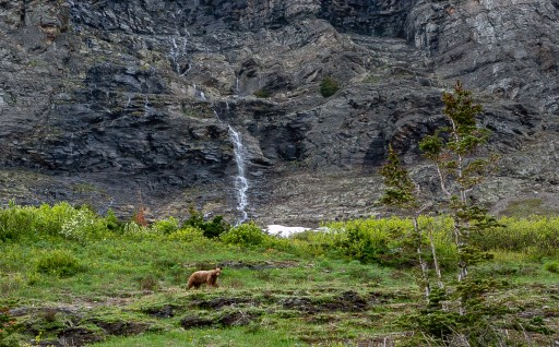 Brown Bear and waterfalls