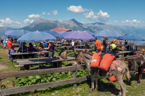 Alp Bovine Patio
